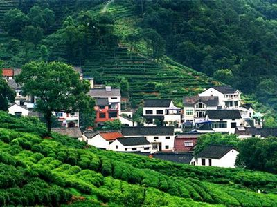 Longjing Tea Village